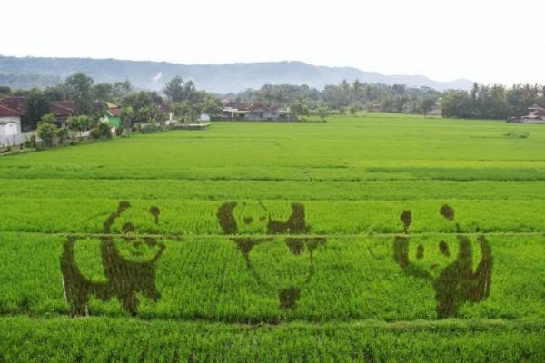 Lucunya Gambar Yang Ada Di Sawah Kreasi Yogyakarta