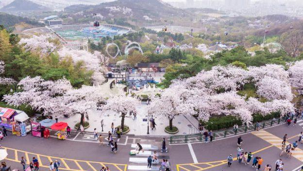 Liburan Ke Daegu-Korea, Dijamin Seru dan Menyenangkan !