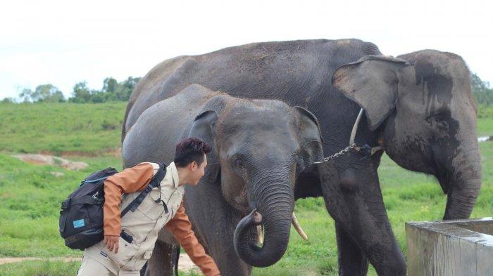 Serunya Bermain Bersama Gajah Di Way Kambas Indonesia